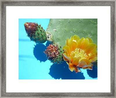 gifts of Spring V Framed Print by Aleksandra Buha