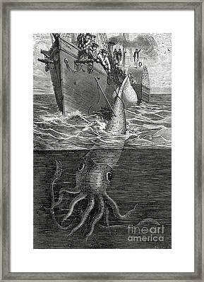 Gigantic Cuttle Fish Framed Print by English School
