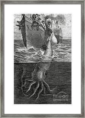 Gigantic Cuttle Fish Framed Print