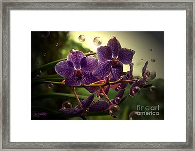 Giggles Framed Print by Joanne Smoley
