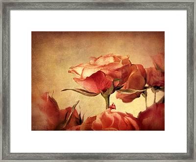 Gilded Roses Framed Print