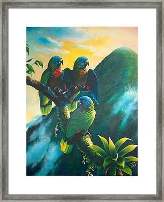 Gimie Dawn 1 - St. Lucia Parrots Framed Print by Christopher Cox