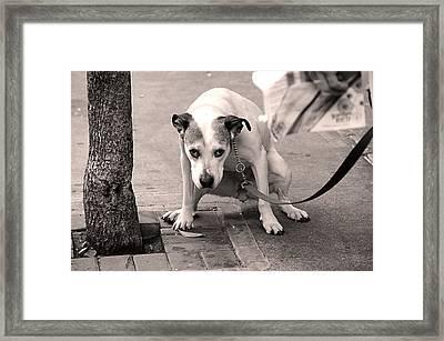 Gimme A Break Framed Print by JoAnn Lense