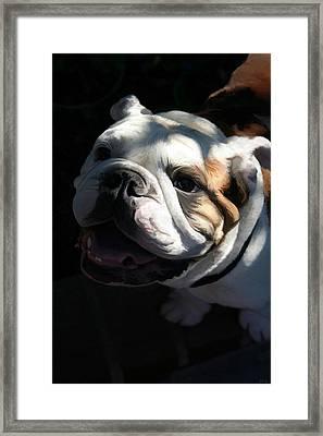 Gimmie A Kiss Framed Print by Holly Ethan