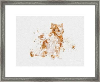 Ginger And White Cat Framed Print