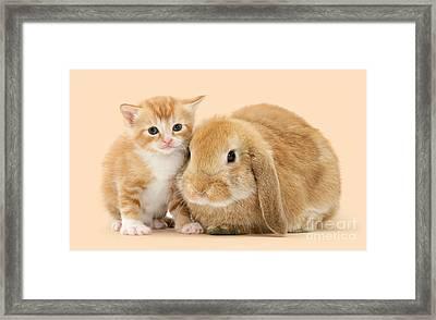 Ginger Kitten And Sandy Bunny Framed Print