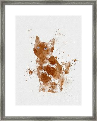 Ginger Kitten Framed Print by Rebecca Jenkins