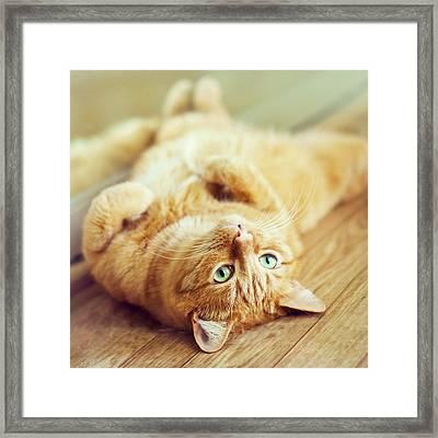 Ginger Lazy Cat Framed Print
