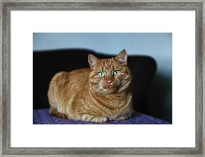 Framed Print featuring the photograph Ginger Marmalade Cat by Nareeta Martin