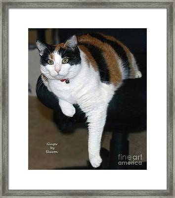 Ginger Posing With Her Leg Framed Print