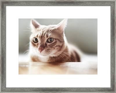 Ginger Tabby Cat Framed Print