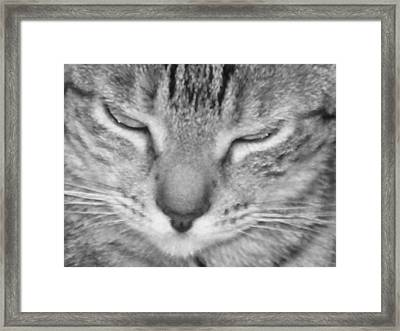 Ginger's Closeup Framed Print by Maria Bonnier-Perez