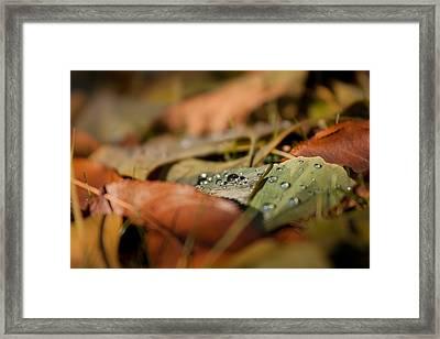 Ginkgo   Framed Print by Bulik Elena