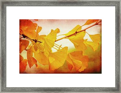 Ginkgo Glory Framed Print