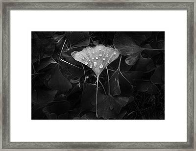 Ginkgo Framed Print