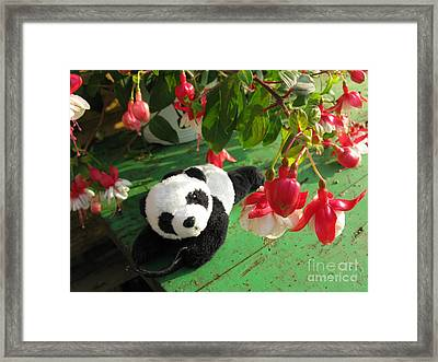 Framed Print featuring the photograph Ginny Under The Red And White Fuchsia by Ausra Huntington nee Paulauskaite