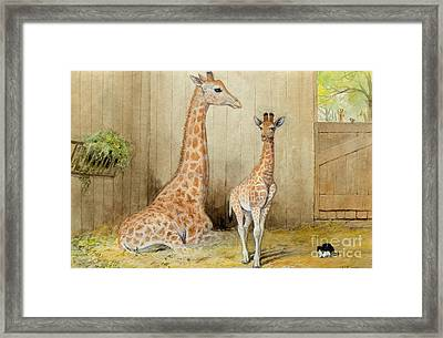 Giraffe And Young Framed Print