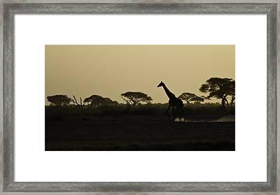 Giraffe At Sunset Framed Print