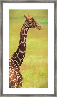 Giraffe - Backward Glance Framed Print