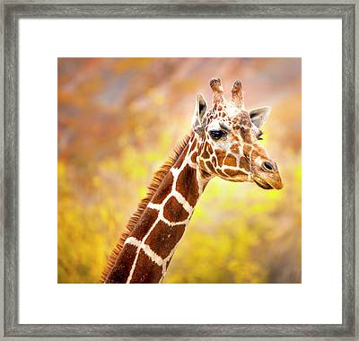 Giraffe Large Canvas Art, Canvas Print, Large Art, Large Wall Decor, Home Decor, Wall Art Framed Print by David Millenheft