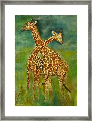 Lovely Giraffe . Framed Print