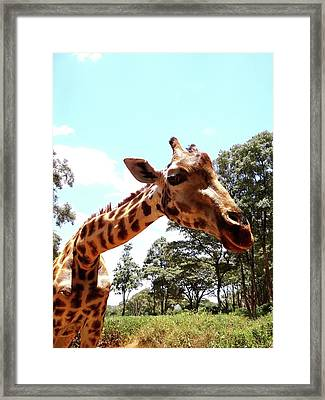 Giraffe Getting Personal 2 Framed Print