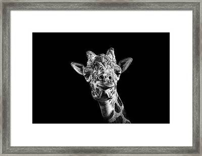 Giraffe In Black And White Framed Print by Malcolm MacGregor