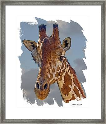 Giraffe Framed Print by Larry Linton
