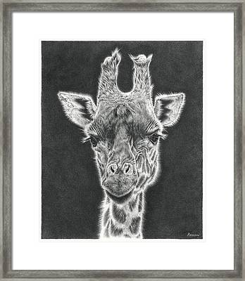 Giraffe Pencil Drawing Framed Print
