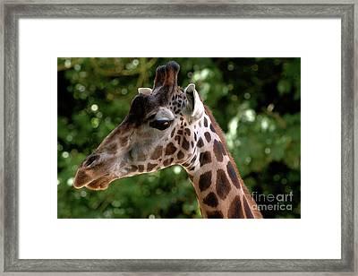 Giraffe Portrait Framed Print