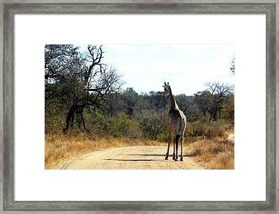 Framed Print featuring the photograph Giraffe by Riana Van Staden