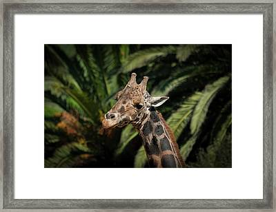 Framed Print featuring the photograph Giraffe  by Roger Mullenhour