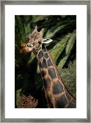 Framed Print featuring the photograph Giraffe Study 2 by Roger Mullenhour