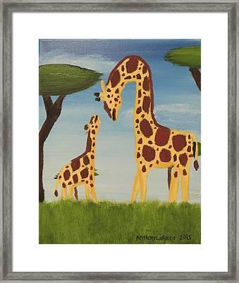 Giraffes Framed Print by Anthony LaRocca