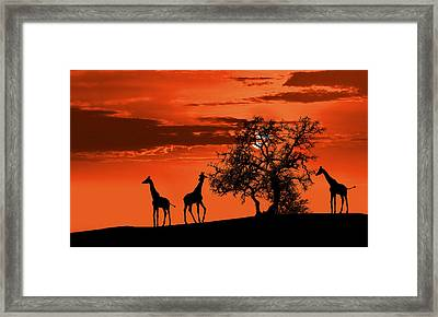 Giraffes At Sunset Framed Print by Jaroslaw Grudzinski