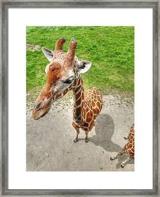Giraffe's Point Of View Framed Print by Michael Garyet