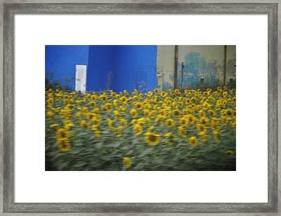 Girasol Framed Print by Tara Miller