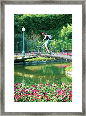 Girl And Bicycle Framed Print
