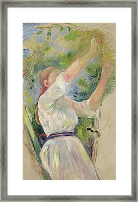 Girl Gathering Cherries Framed Print by Berthe Morisot