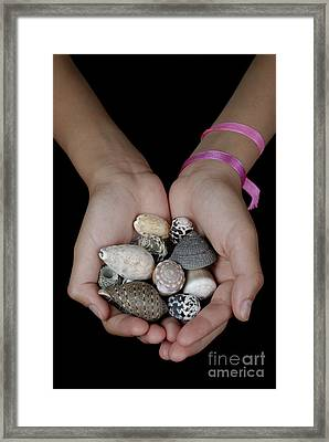 Girl Holding Shells In Clasped Hands Framed Print by Sami Sarkis