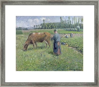 Girl Tending A Cow In Pasture Framed Print by Camille Pissarro