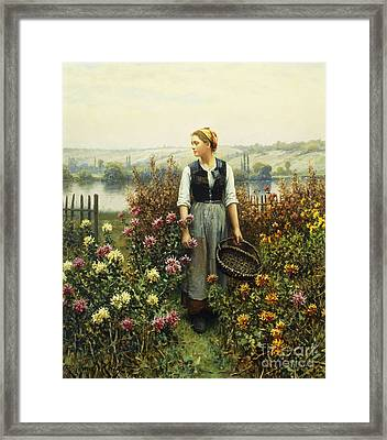 Girl With A Basket In A Garden Framed Print by Daniel Ridgway Knight