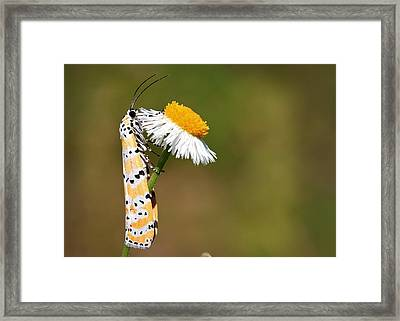 Give And Take Framed Print by Gary Yost
