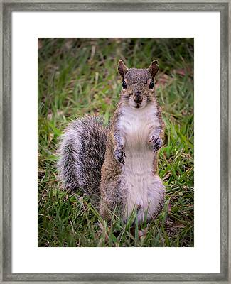 Give Me Your Paw Framed Print by Zina Stromberg