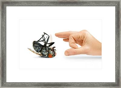 Give Pests The Flick Framed Print by Jorgo Photography - Wall Art Gallery