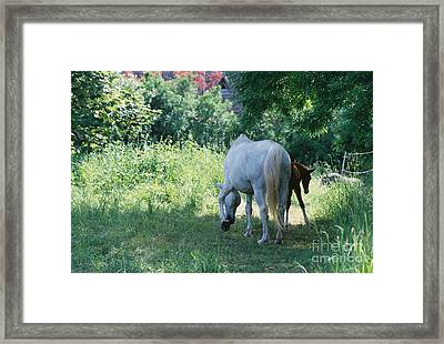 Giverny Mare And Foal Landscape Framed Print by Nadine Rippelmeyer