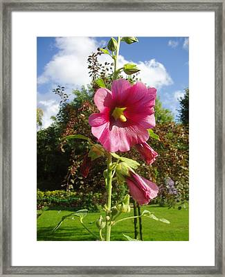Giverny Xiii Framed Print by Wendy Uvino