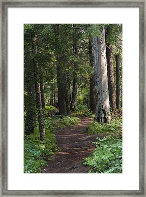 Framed Print featuring the photograph Glacier National Park Woodland Trail by Kevin Blackburn