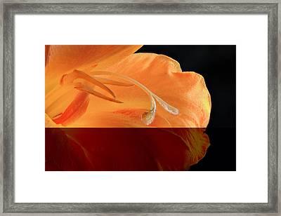Glad Close Up Framed Print by Jean Noren