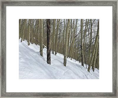 Gladed Run Framed Print by Christin Brodie